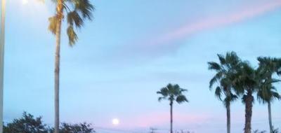 Moon with pink sky 400 x 400 c Nuala Molloy Moran